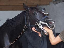 Vijlen Kiezen En Tanden Van Paarden En Ponys